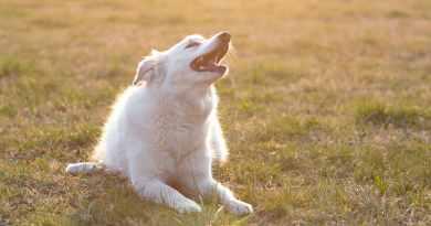 Le abilità nascoste dei cani. La rubrica di Heidi
