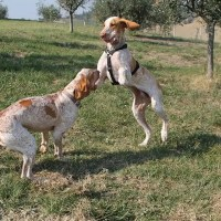 I Bracchi Bed and Breakfast in autunno con il cane