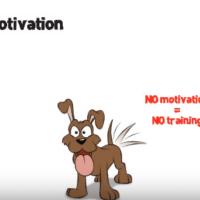 Motivazione del cane: 10 consigli per ottenerla