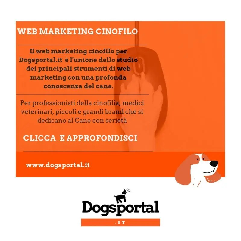 WEB MARKETING CINOFILO