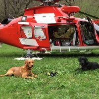 Come lavora un cane da soccorso? L'evento in Piemonte!