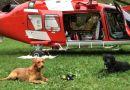 i cani da soccorso