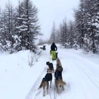Sleddog e cani da slitta: una storia lunga 2000 anni