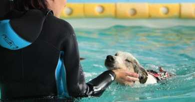 Cani e disabilità