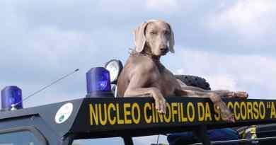 Addio a Greta del nucleo cinofilo da soccorso Argo