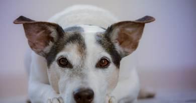 Castrazione del cane e comportamento: si o no?