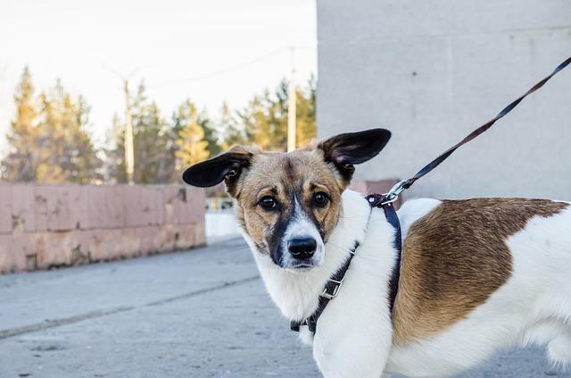 Allenare il cane come stile di vita