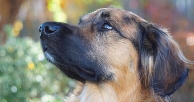 stati emotivi del cane