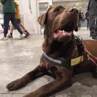 I Cani allerta diabete del Progetto Serena