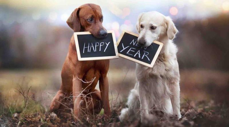 Gli italiani festeggiano la vigilia di Capodanno con il proprio cane