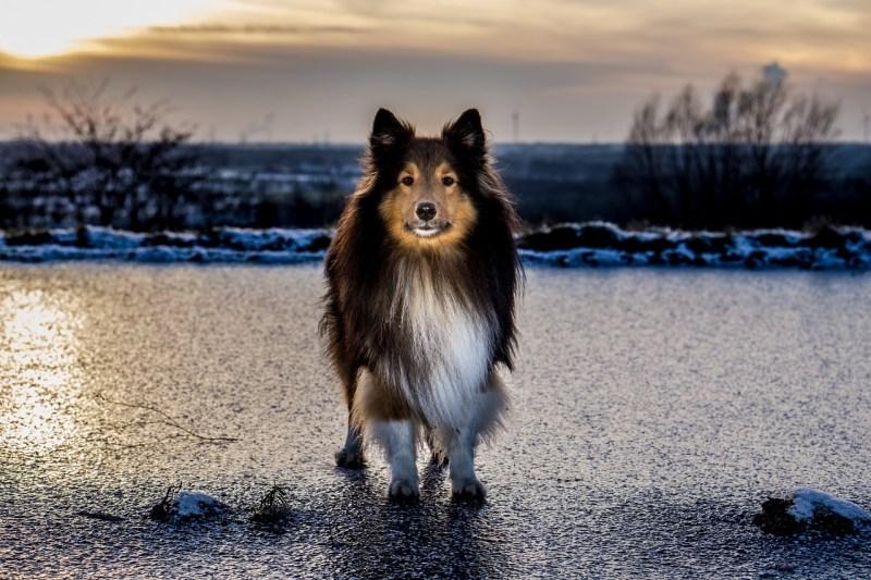 il cane e l'inverno