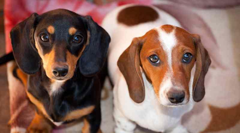Dela, la maison torinese per il cane: spedizioni gratis per tutti