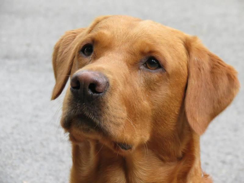 Approccio cognitivo nell'addestramento del cane da ricerca