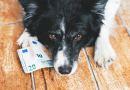 Un bonus per le famiglie con gli animali? Un assordante silenzio.