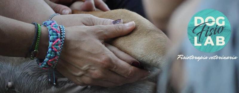 Dog Fisio Lab: arriva la fisioterapia per il cane a Torino