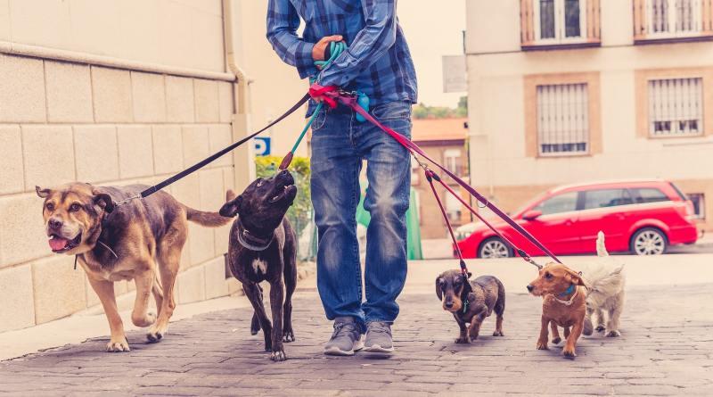 Dog sitter: 8 modi per capire se è un cugino…e salvare i tuoi cani.
