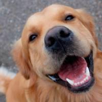 Perché scegliere un antiparassitario spot on combinato per il nostro cane?