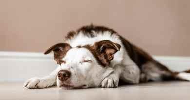Agopuntura per i cani: benefici e applicazioni