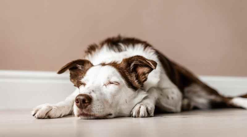 agopuntura nel cane