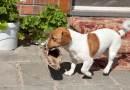 Il metodo infallibile per la gestione del tuo cane? Non esiste.