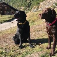 Il miglior amico del cane, si vede nel momento del bisogno! La campagna di DELA contro l'abbandono delle deiezioni.