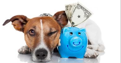 Iva al 10% per il benessere del cane: la lettera aperta al Governo