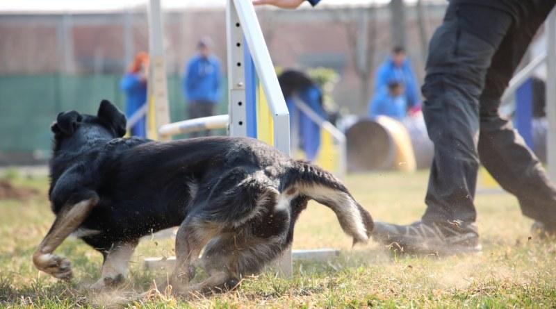 E-Dog: cinofilia e passione a Druento, a due passi da Torino