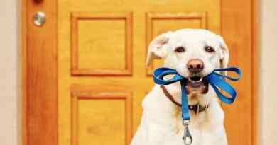 I cani devono uscire e ricevere stimoli: nuova legge in Germania