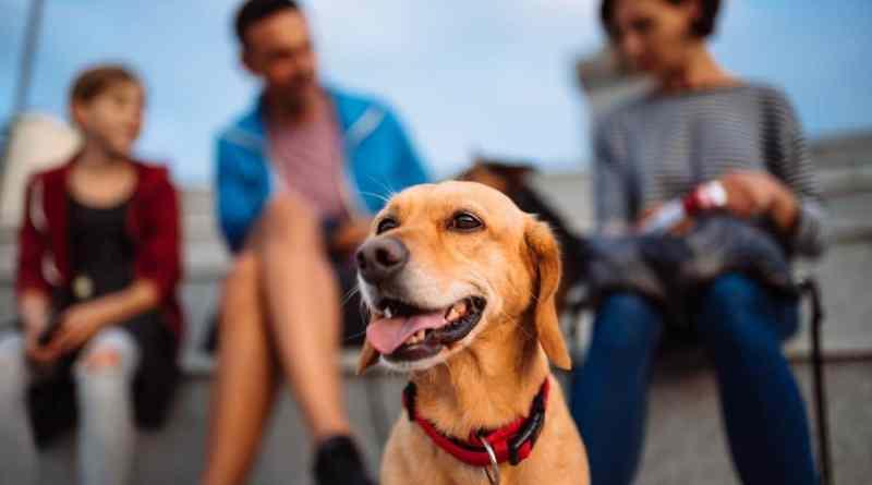 La spontaneità del cane: un elemento fondamentale per Cosimo Lentini.