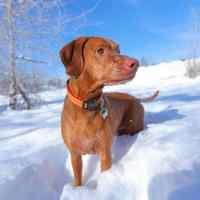 Quando serve il cappottino al cane, cerchiamo la qualità.