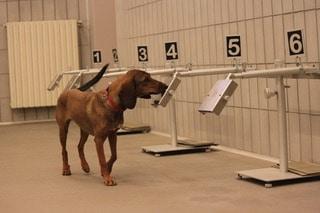 Il fiuto dei cani per individuare il COVID-19