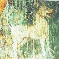 Storia dei cani allevati per il combattimento in India