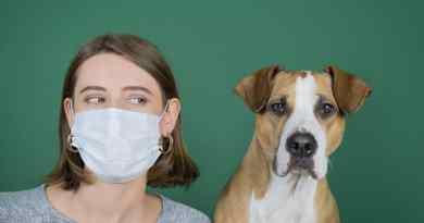 Cani e COVID-19, facciamo il punto: il cane ha un ruolo epidemiologico nella pandemia?
