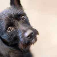 Parlare di normative e pensioni per cani è retorica?