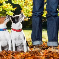 Animali d'affezione: nasce il comitato per la riapertura dei servizi