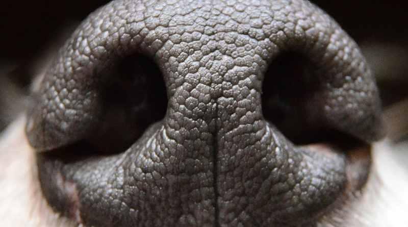 Giocare insieme al cane impegnando il suo olfatto. Il webinar per tutti!