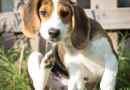 Olio di neem per i cani: protegge davvero dai parassiti?