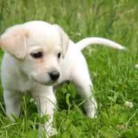 ROMA - cucciolo di Labrador ucciso a calci: inasprire le pene è necessario