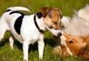 10 consigli per aprire una pensione per cani ( e non fare il canaro)