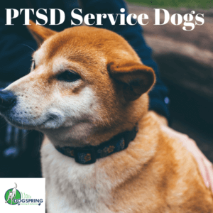 Ptsd Service Dogs Promising New Study Dog Training Fresno Board