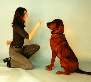 Ch 5 Adult Dog Training 2 years