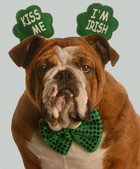 Saint Cute Puppy Hd Wallpaper 8 St Patrick S Day Limericks As Written By Dogs