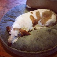 Tips for Cleaning Dog Beds