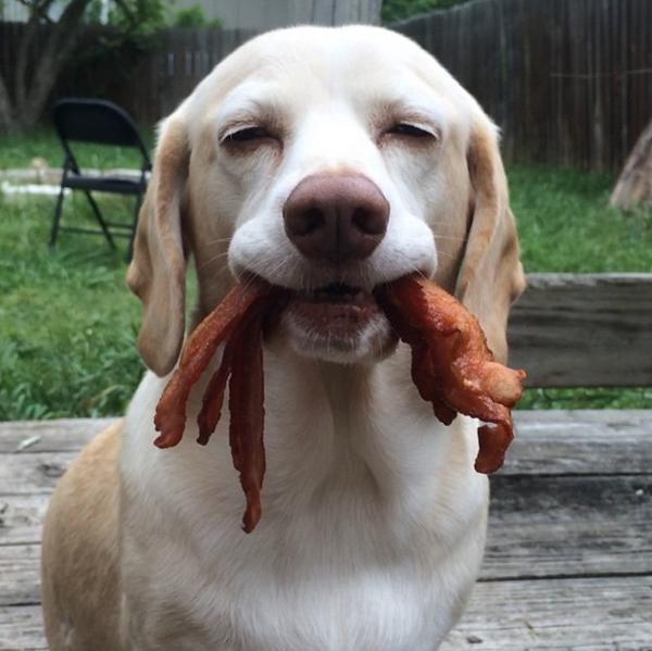 sid-bacon