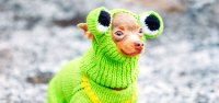 The Cutest Dog Halloween Costumes