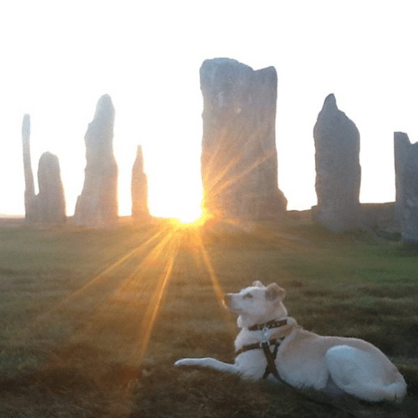 Ralph at the Callanish Stones on Isle of Lewis, Scotland. (Photo via Kaori Tomaru's Instagram)