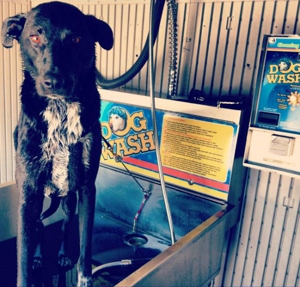 Riggins in the self dog wash just outside of Yosemite, CA. (Photo by Wendy Newell)