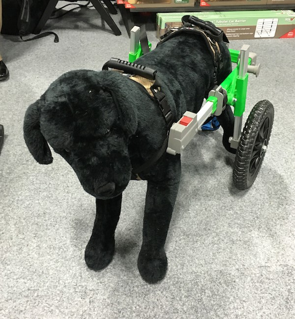 Doggie wheelchair. (Photo by Melissa L. Kauffman)