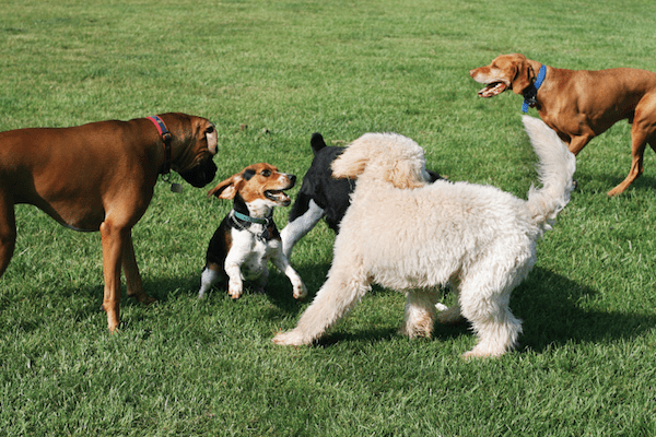 Dogs at a park by Shutterstock.
