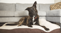 How to Teach Your Dog to Stay Off the Furniture
